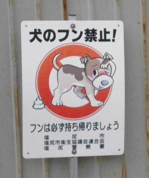 犬糞~塩尻市