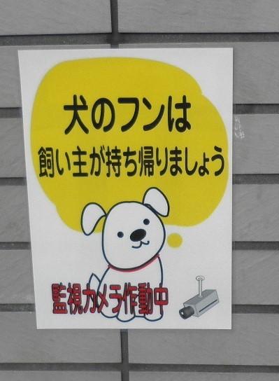 犬糞~横浜市2