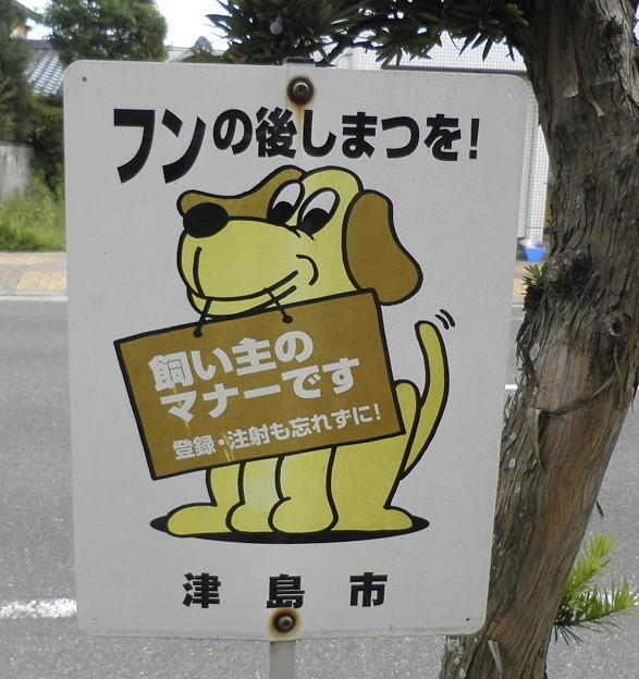 犬糞 ~津島市2