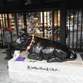 Photos: 苦労し黒牛飼う