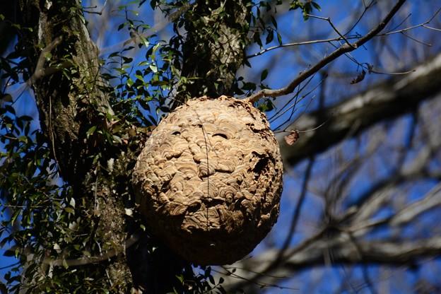 Photos: 巣