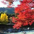写真: 秋色の渓谷