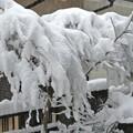 写真: 大雪