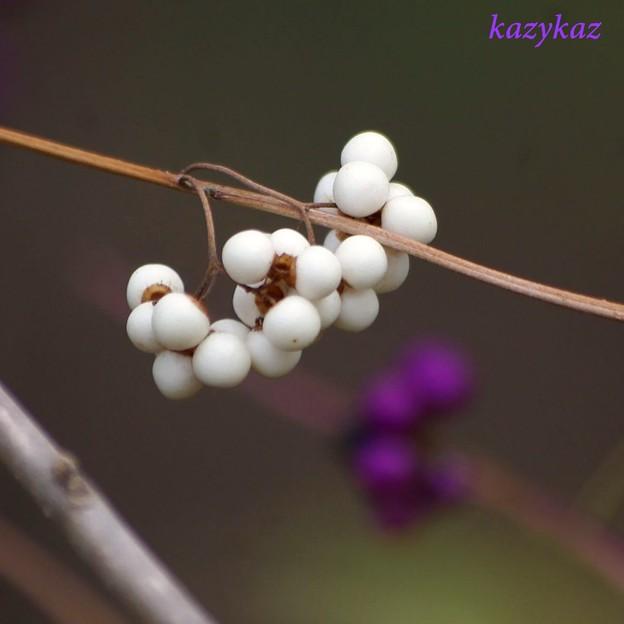 写真: 白い紫