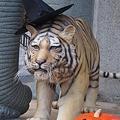 多摩動物公園_20111029