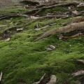 緑のじゅうたん