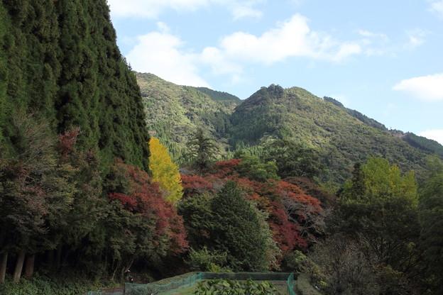 神社の裏側