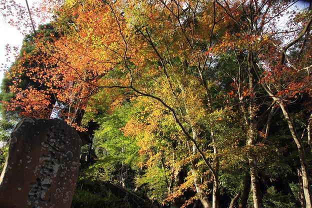 神社の紅葉