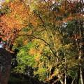 写真: 神社の紅葉