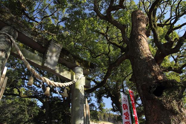 諏訪神社正月