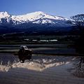写真: 収穫への道