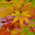 写真: また秋ですね。 2年経ってました。