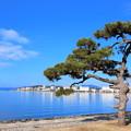 Photos: 湖畔散歩
