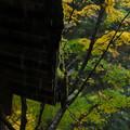 写真: 晩秋の軒先