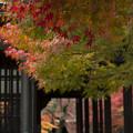 写真: ふたりの秋