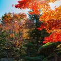 写真: 庭園の秋