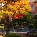 Photos: 庭園の秋