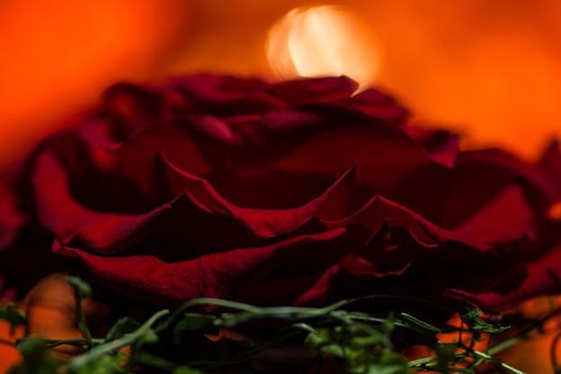1本の赤い薔薇