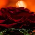 写真: 1本の赤い薔薇