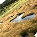 写真: ハートの池