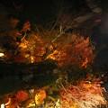 写真: 水鏡in京都