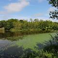 小さな沼の風景-3