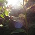 写真: 蜘蛛の巣に光