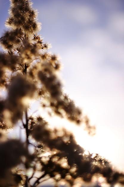 草原のクリスマスツリー