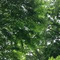 Photos: 見上げれば、深緑(都内某所の自然2014・32)