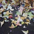 写真: 落ちた、こう!葉> タイワン フウか←5