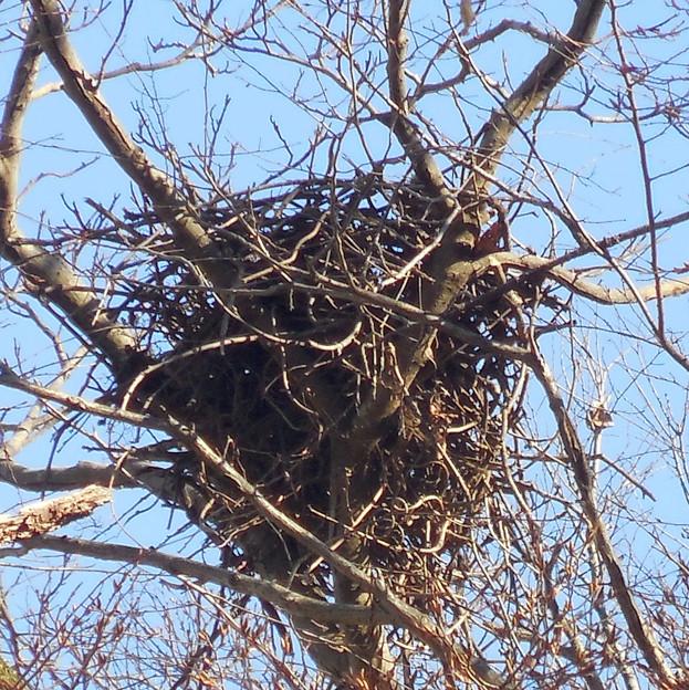 鳥の巣> ナニカ?←1