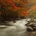 写真: 琴畑渓流と紅葉