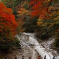 ビートルズ風粟又の滝