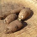 Photos: 収穫野菜9