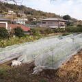 のほほん農園風景2