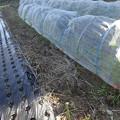写真: のほほん農園5