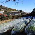 写真: のほほん農園風景1(縮小)