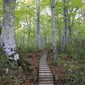 写真: 木道を行く