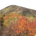 写真: 紅葉の道を行く
