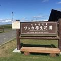 Photos: ワッカ原生花園