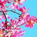 写真: 開花すると秋