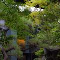 写真: 根津美術館 (2)