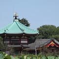 上野池之端弁天堂