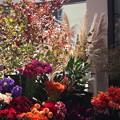 お花屋の店先も秋です。