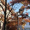 写真: 秋色と影