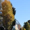 東京ドーム通りの冬晴れ