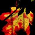 陽射し受ける 柏葉紫陽花の葉