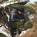 護国寺境内松の枝切り 魚眼風撮影