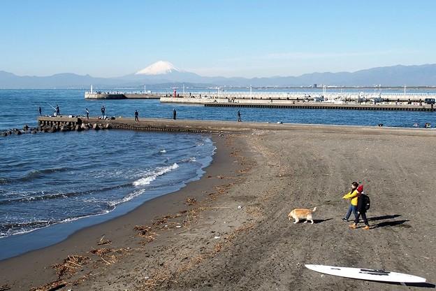写真: ワンちゃんとお散歩1