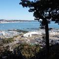 写真: 江の島からの眺望